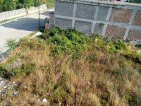 I cittadini segnalano: spazzatura ed erba alta in via Francesco Del Vecchio nel Quartiere Stella