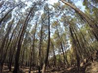 Sopralluogo congiunto SMA Campania – Università della Campania (ex SUN) e Carabinieri Forestali (Ufficio Tutela Biodiversità), avvenuto nei giorni a seguire i grossi incendi alla Riserva Integrale del Vesuvio.