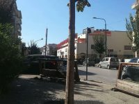 """Casoria, un albero è stato cementificato nel terreno. La consigliera Vignati:""""Non si poteva transennare invece di asfaltarlo!?!"""""""