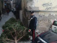 Ritrovato l'albero della Galleria Umberto rubato ieri