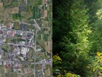 Il bosco delle caldaie: il cuore verde della Terra dei Fuochi