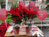 Stelle di Natale e braccialetti per la ricerca contro leucemie, linfomi e melomi: anche quest'anno la AIL fa tappa a Casoria