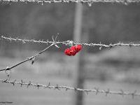 Essere Altrove (edizione speciale per la Giornata della Memoria): I viaggi di Giovanni e Anna. Cracovia e AUSCHWITZ