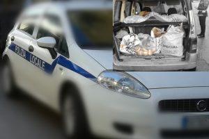 Sant'Antimo (NA) – Trasportava pane per la vendita senza rispettare le condizioni igienico sanitarie. Denunciato uomo dai caschi bianchi e ispettori sanitari con sequestro merce.