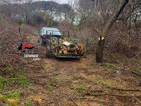 Arrestato dai carabinieri mentre taglia legna da ardere in terreno altrui