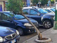 I cittadini segnalano: pericolo crollo albero a Via Principe di Piemonte