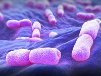 Listeria:pochi accorgimenti per prevenire ogni rischio