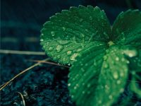 Prima presentazione nazionale del libro. Dopo la pioggia le foglie sono verdi di Salvatore D'Antona.
