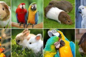 Riceviamo e pubblichiamo. Un italiano su tre ha un animale domestico: oltre 60 milioni i Pet d'Italia