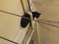 """Frattamaggiore. Alla giornata internazionale del """"gatto"""" gli agenti della polizia locale del comandante Chiariello ne salvano uno incastrato da un tubo e a rischio caduta nel vuoto"""