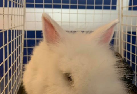 Ritrovato coniglio sulla Sp1, l'appello disperato delle associazioni