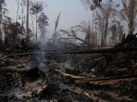 Alberi bruciati nella regione di Vila Nova Samuel, vicino a Porto Velho, nello stato di Rondonia, il 25 agosto 2019 (AP Photo/Eraldo Peres)