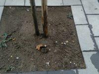 """Casoria, i cittadini segnalano: """"Rubate le griglie attorno agli alberi"""""""