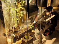 Casalnuovo: carabinieri arrestano giovane per serra di marijuana in casa