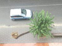 Maltempo: a Via Principe di Piemonte: un albero invade la carreggiata.