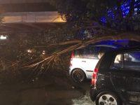 Casoria, danni da maltempo: alberi crollati, auto danneggiate, panico in città