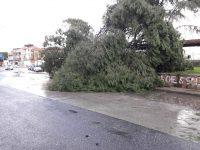 Vento e pioggia, gravi danni al parco di Arpino-Cittadella e a Casoria centro