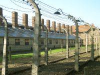 """Riceviamo e pubblichiamo. L'omocausto: lo sterminio dimenticato degli """"ultimi tra gli ultimi"""""""