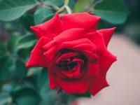 S. Valentino, l'amore all'incontrario